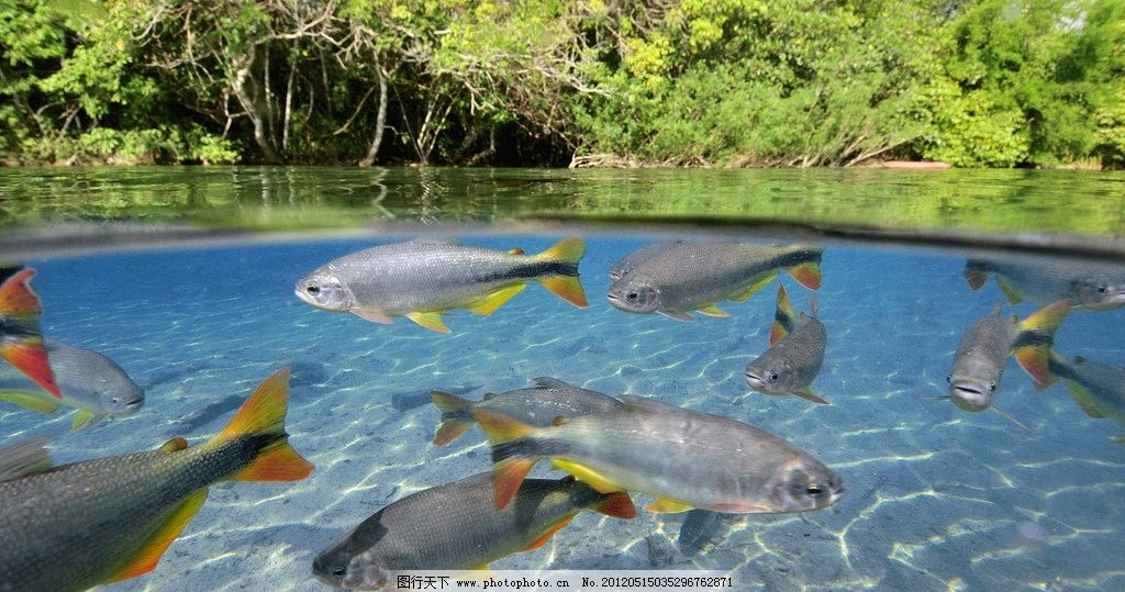 动物 海洋世纪 海洋世界