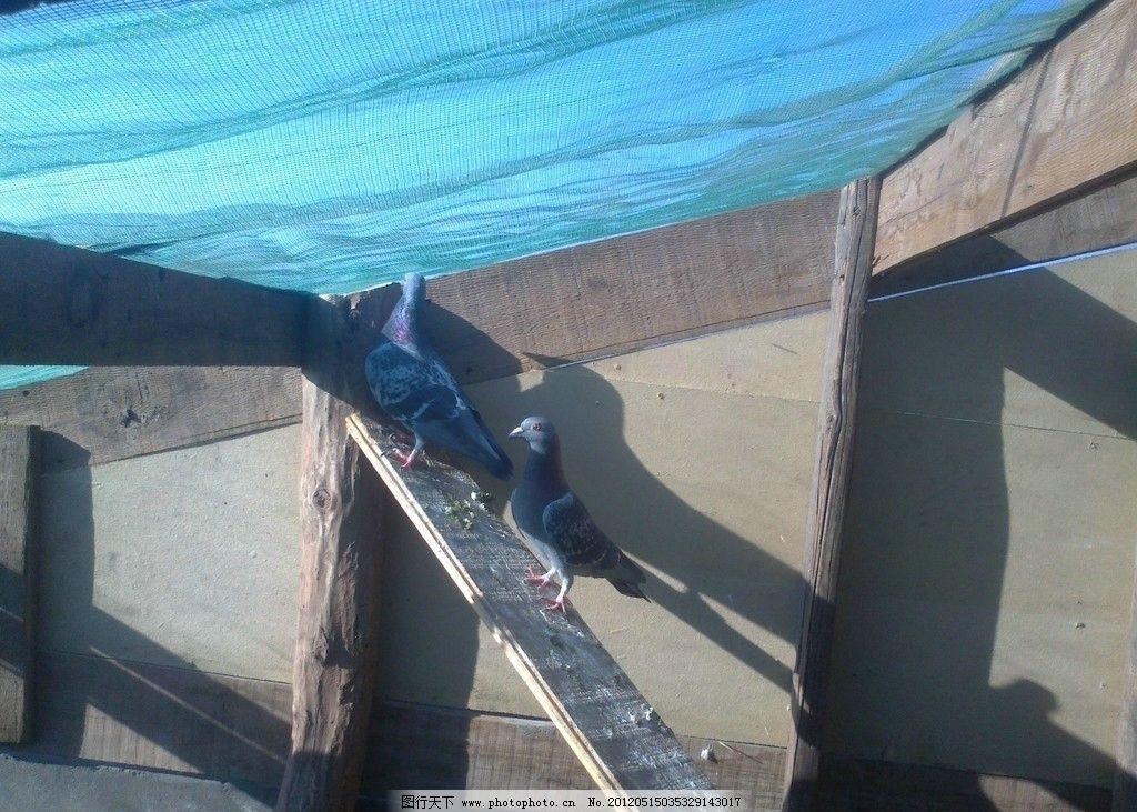 长35米的鸽子棚设计图