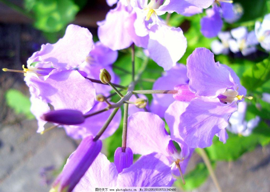 可爱又漂亮的纸折紫丁香
