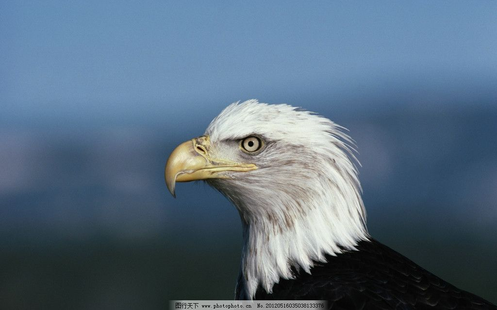 霸气手绘老鹰图片