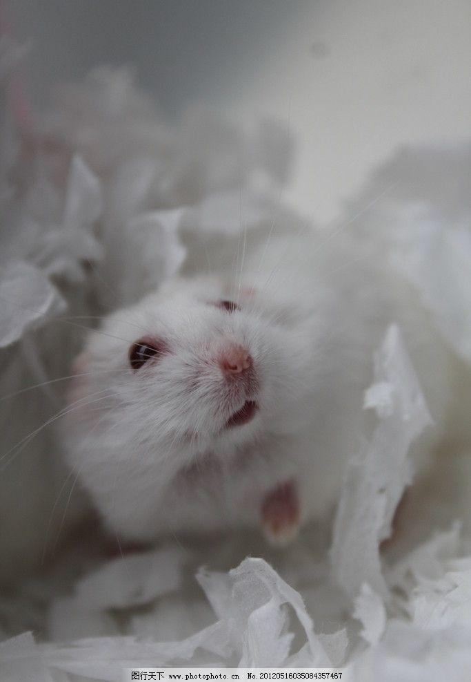 疯狂动物城冰仓鼠