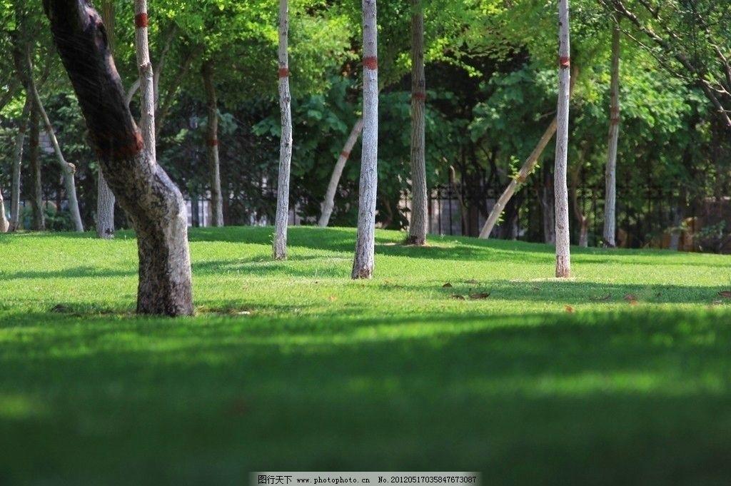 绿荫 公园 草坪 草地 树林 林荫 摄影 屏保 桌面 树木树叶 生物世界