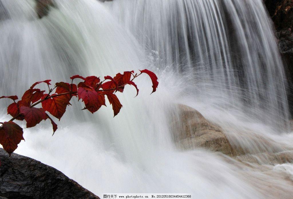出水红叶 瀑布 红叶 石头 大水 山水风景 自然景观 摄影 300dpi jpg