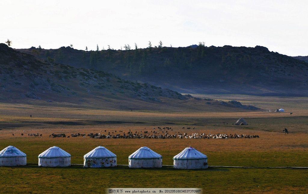 美麗草原我的家 牛羊 蒙古包 草地 秋景 自然風景 蒙古人家 動物
