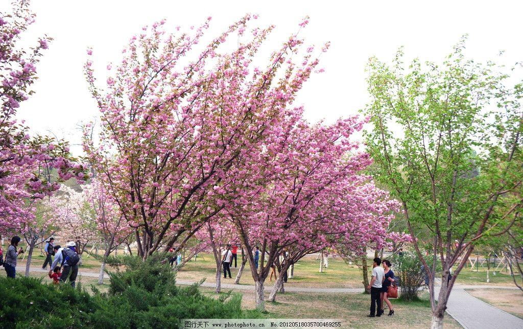 樱花 春花 白花 红花 日本樱花 春天 绿树 绿水 花树 水岸 公园 游人