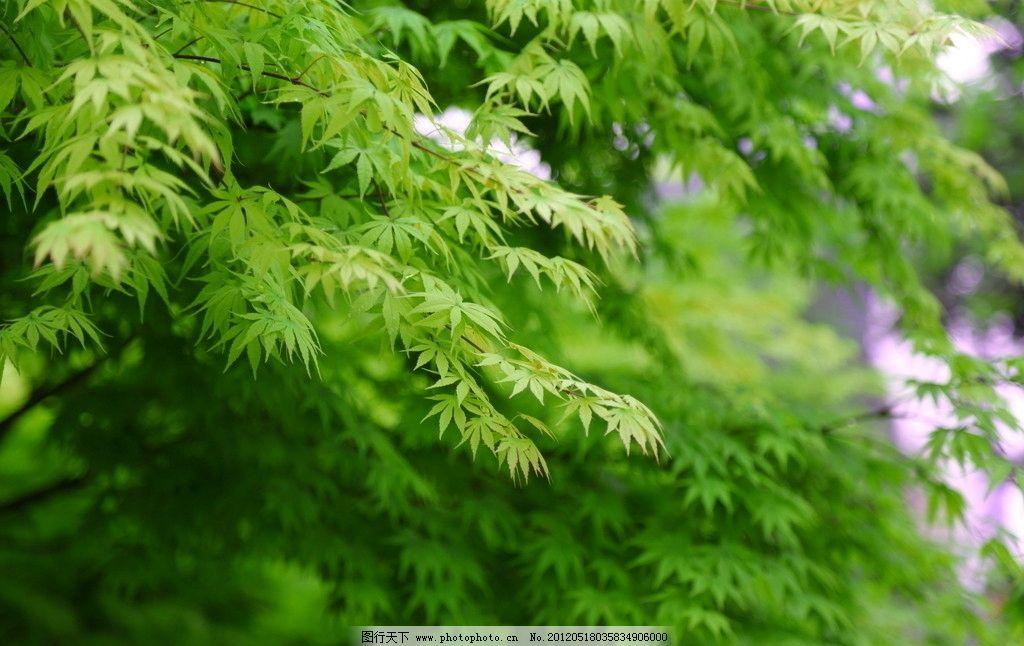 清新树叶图片