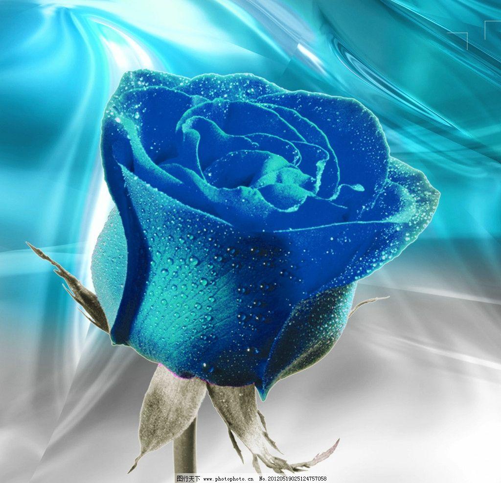 蓝色妖姬是干花吗_蓝色妖姬是玫瑰吗 _排行榜大全