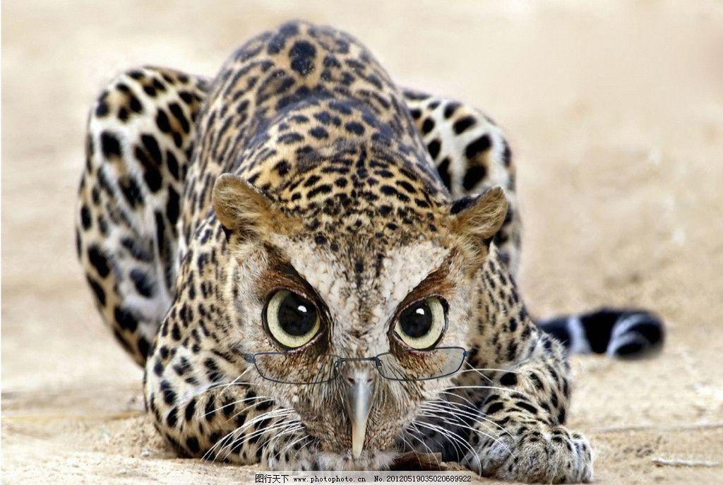 奇怪的动物图片