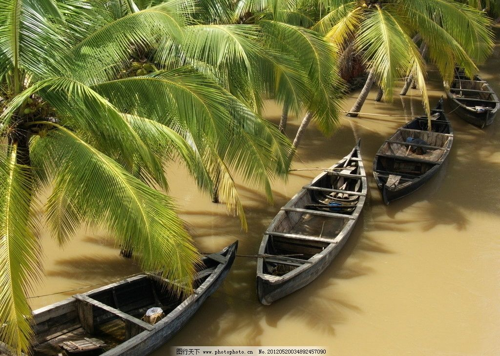 小船椰子树图片