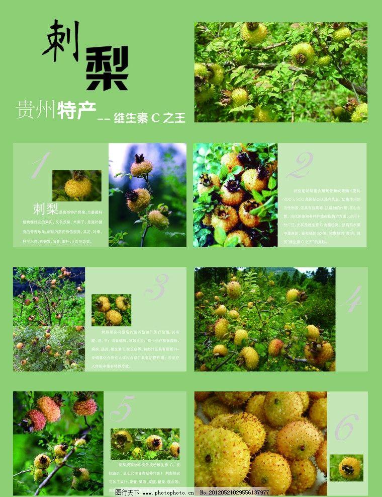 刺梨 贵州特产 广告设计 矢量 ai