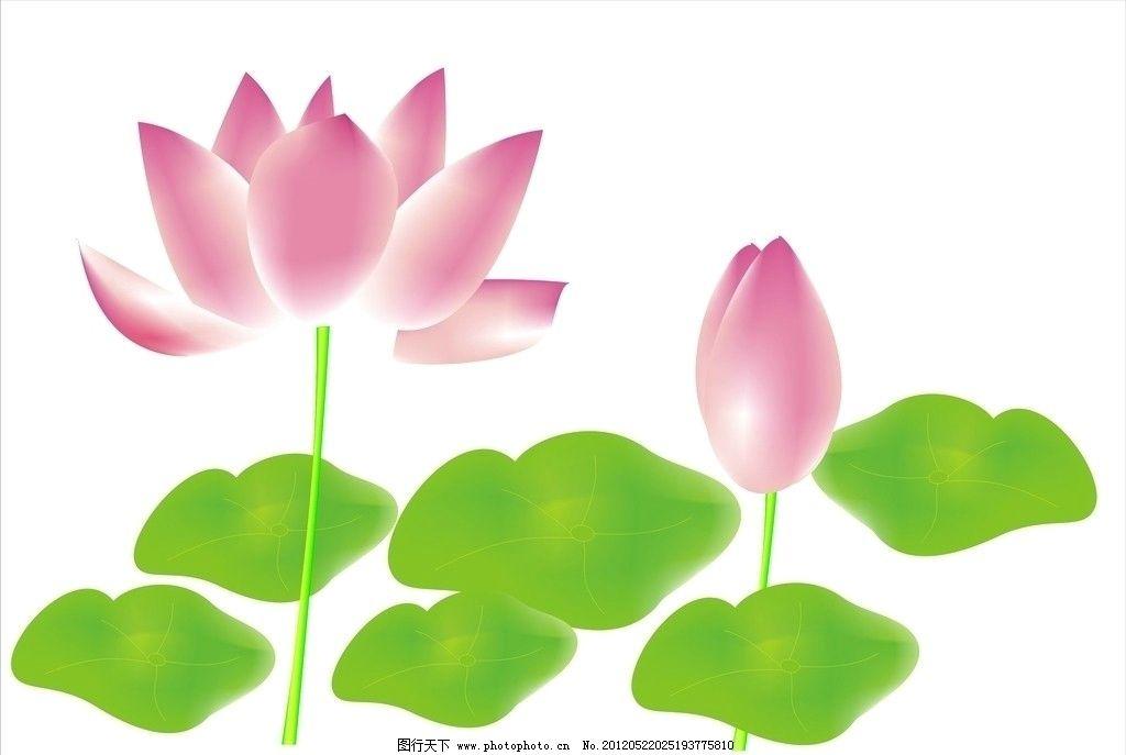 莲花 手绘 荷花 素材 廉洁 花