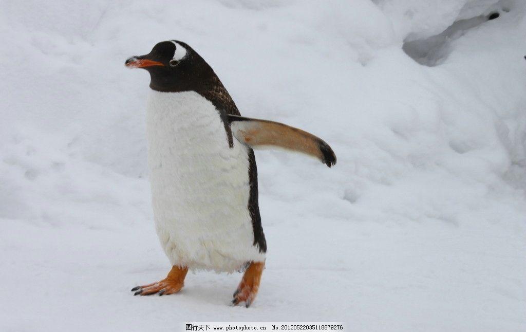 壁纸 动物 企鹅 1024_646