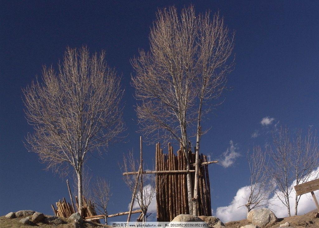 甘孜美景 秋天 白云 蓝天 石头 两棵树 国内旅游 旅游摄影 摄影 72dpi
