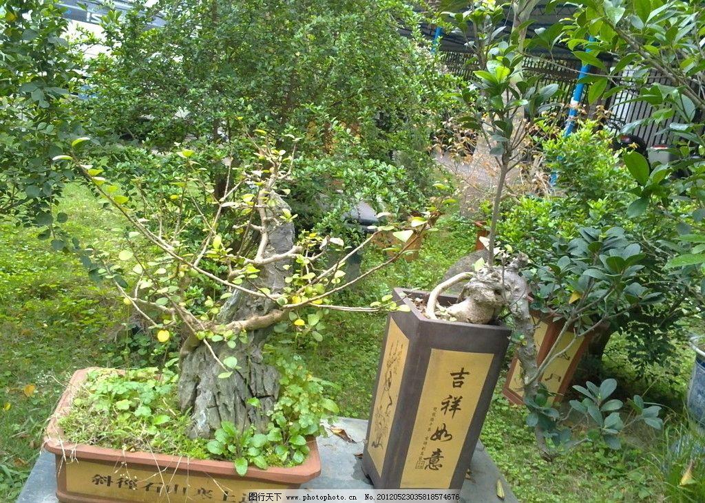 盆景 園林盆景 松樹盆景 花卉盆景 樹葉 花盆 木架 自然風景