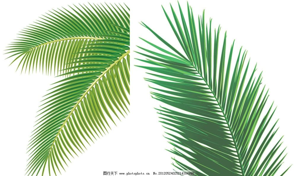 椰子树叶矢量图片