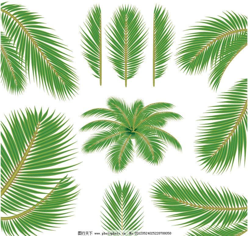 椰子树 树叶 椰子 绿色 叶子 绿叶 手绘 矢量 植物主题 树木树叶 生物