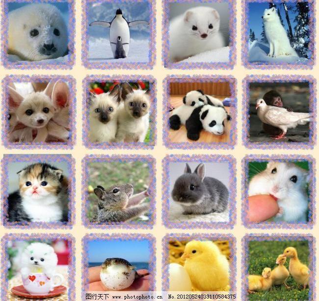 可爱萌宠大集合 宠物 狗 海豹 狐狸 鸡 龙猫 可爱萌宠大集合素材下载