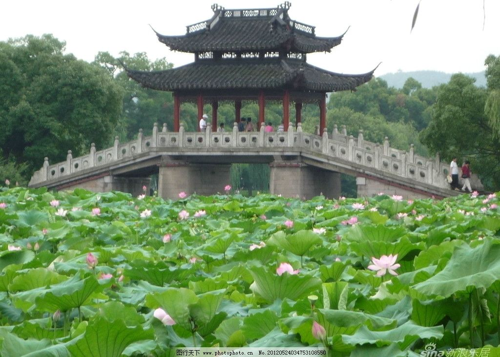 荷花 亭子 绿色 植物 花瓣 荷叶 花草 建筑景观 自然景观 摄影 72dpi