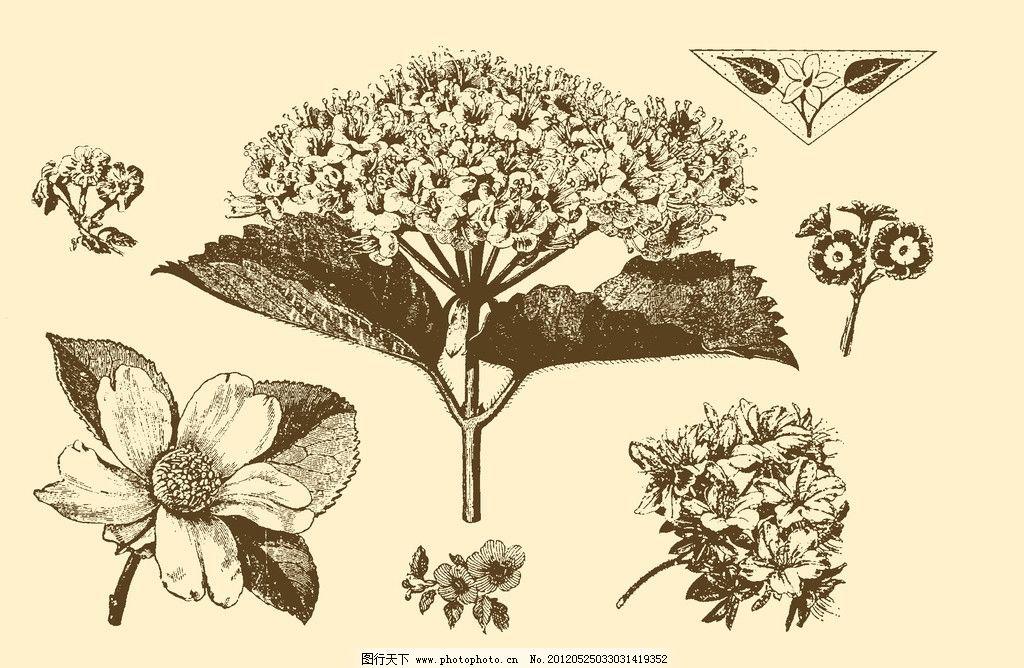 植物装饰画 图案 插画 插图 版画 简笔画 风光 装饰画 黑板报 植物 钢