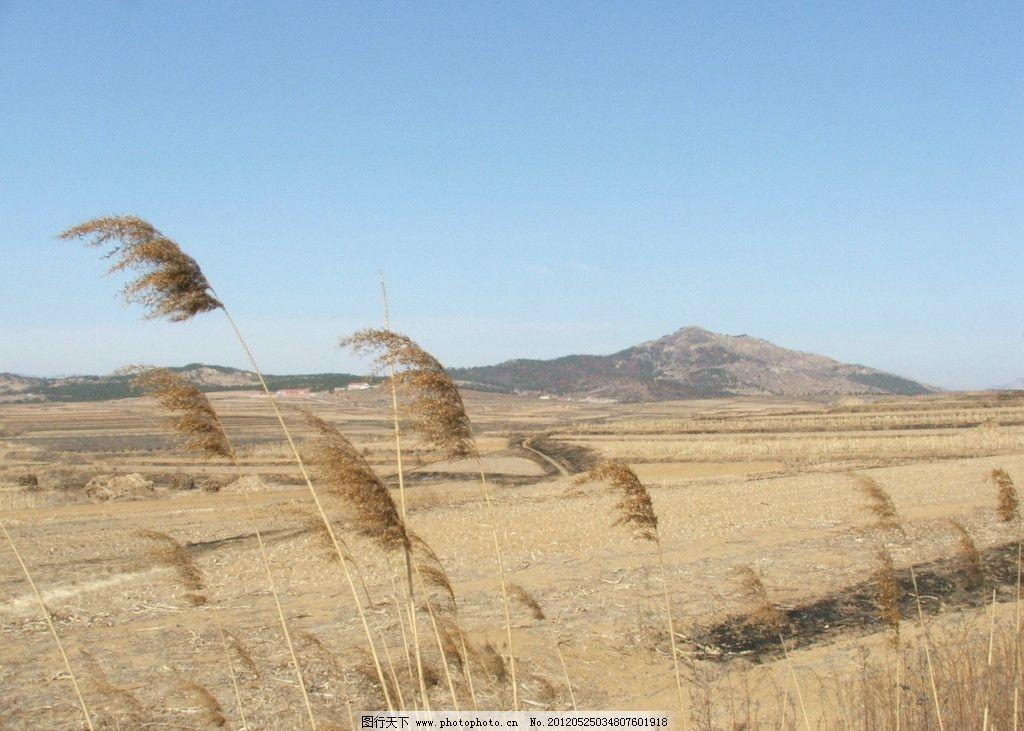 农村 农田 冬天 山坡 芦苇 摄影