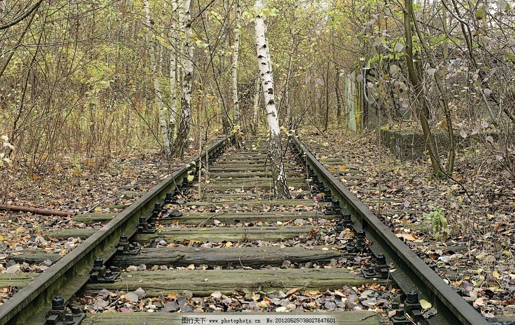 废弃铁轨 铁轨 枕木 铁路 落叶 树林 枯叶 秋天 白桦树 杂树 荒野