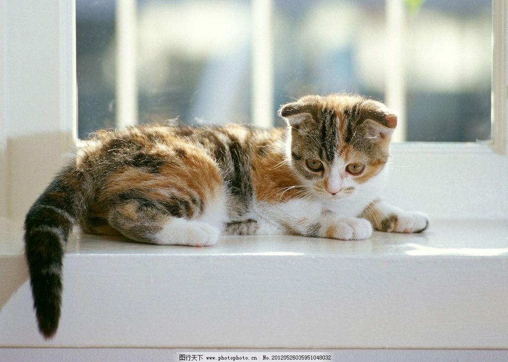 高清素材 猫咪 高清 素材 小猫 可爱 家禽家畜 生物世界 摄影 350dpi