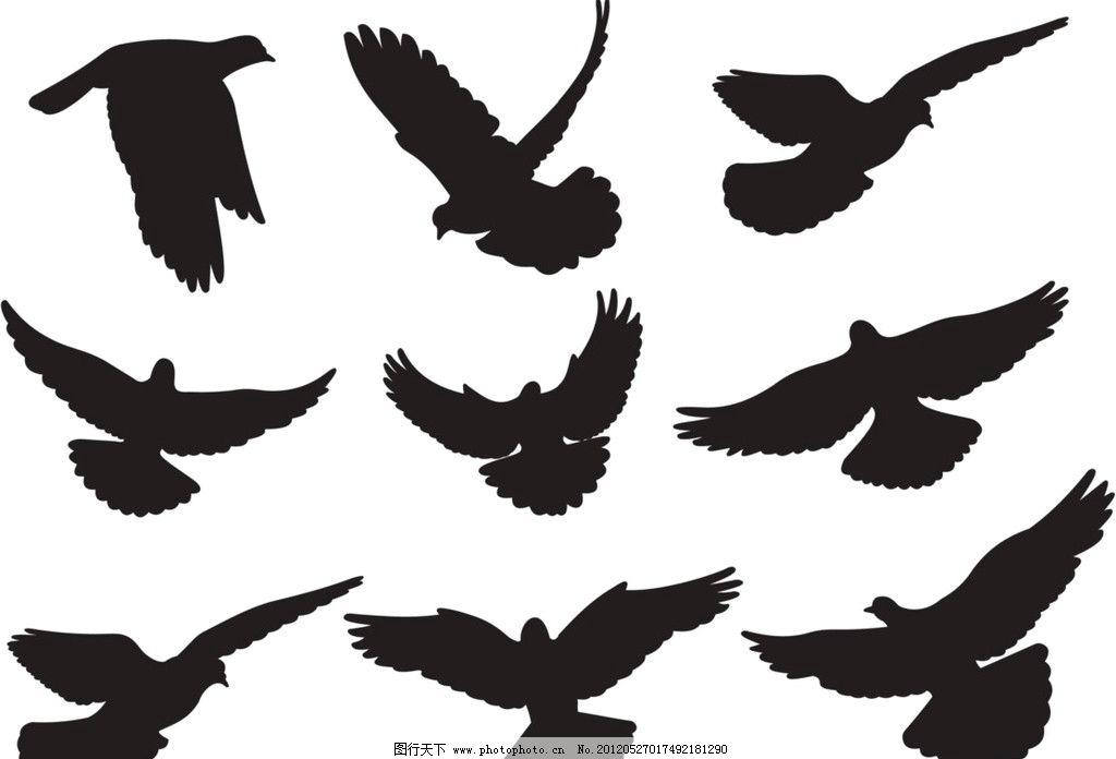矢量鸽子 矢量鸟类 鸟类 鸽子矢量图 矢量鸟 生物世界 矢量 矢量动物
