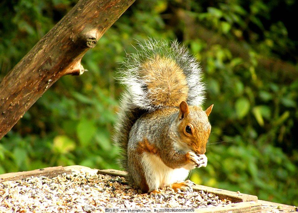松鼠 动物摄影 动物素材 野生动物 松鼠素材 生物世界