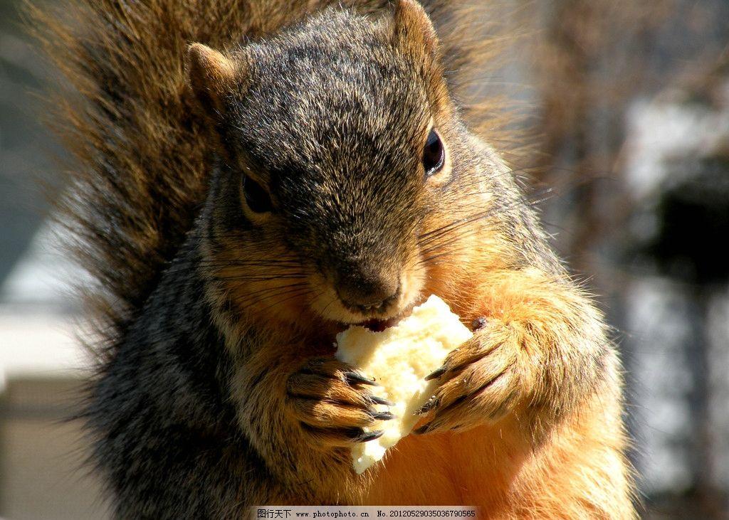 松鼠 动物摄影 动物素材 松鼠素材