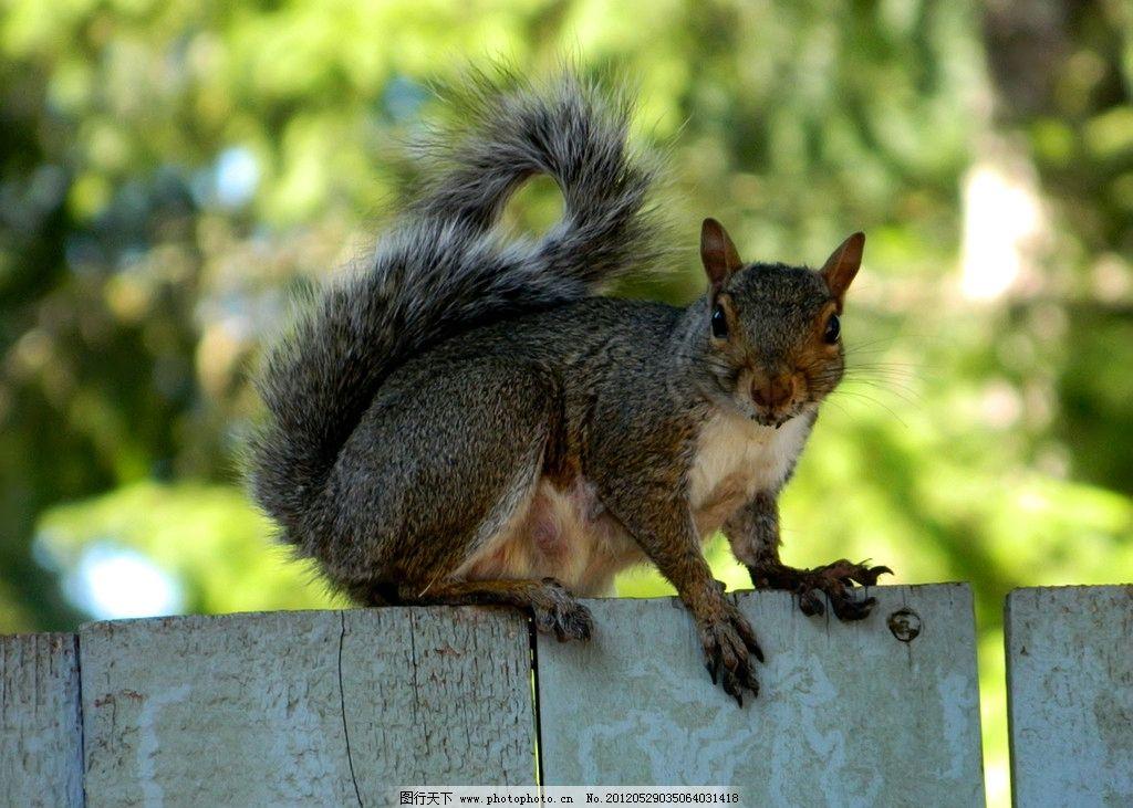 松鼠 动物摄影 动物素材 野生动物 松鼠素材 松鼠图片 生物世界 摄影