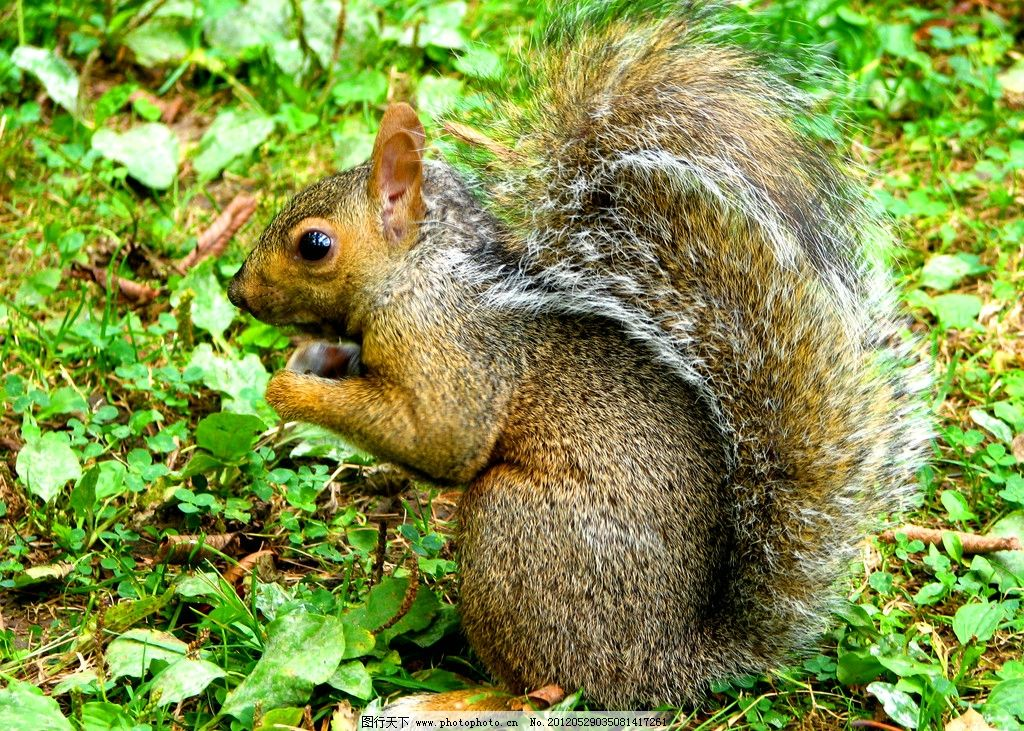 动物素材 野生动物 松鼠素材