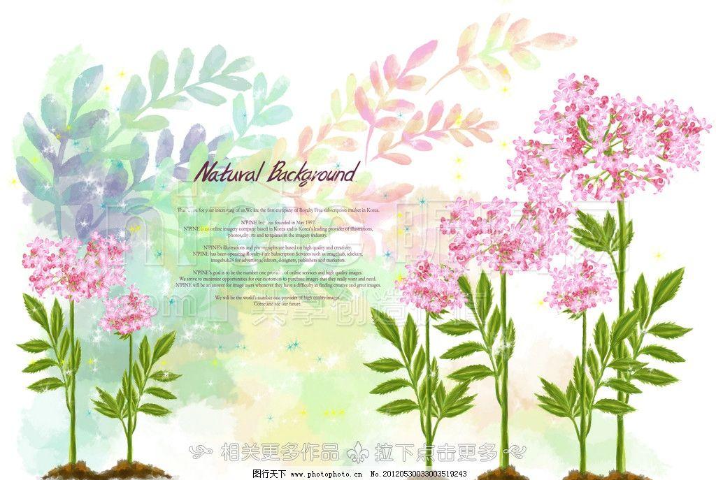 手绘花卉 花卉插画 手绘花朵