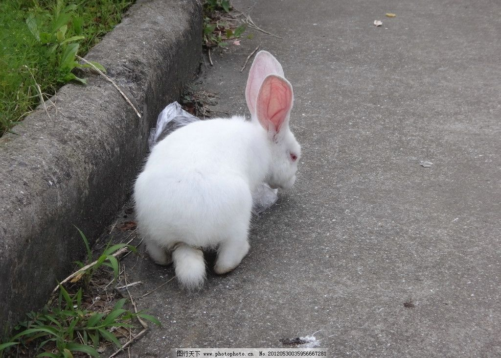 很可爱 小白兔 吃东西 动物 兔子 家禽家畜 生物世界 摄影 350dpi jpg