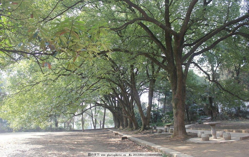 树荫小道 大树 小路 公园 摄影 摄影图片 国内旅游 旅游摄影 72dpi jp