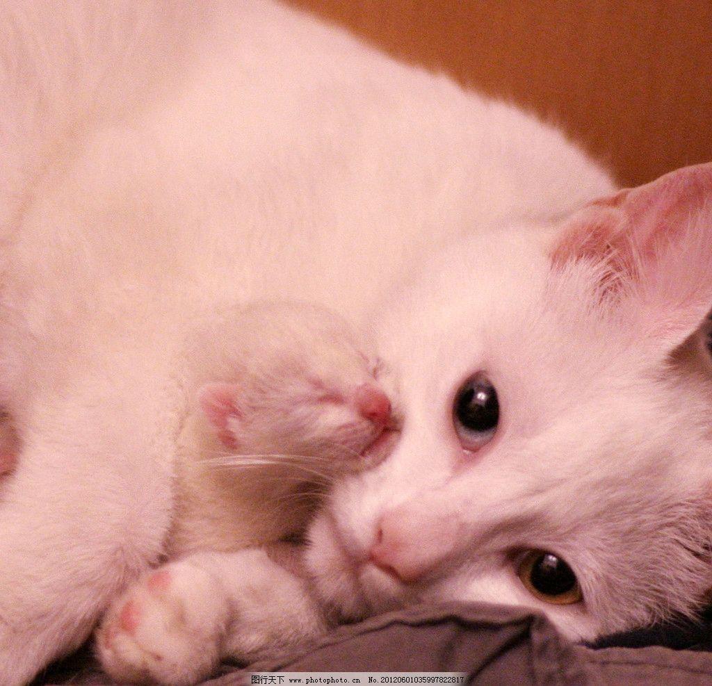 可爱的小猫仔图片