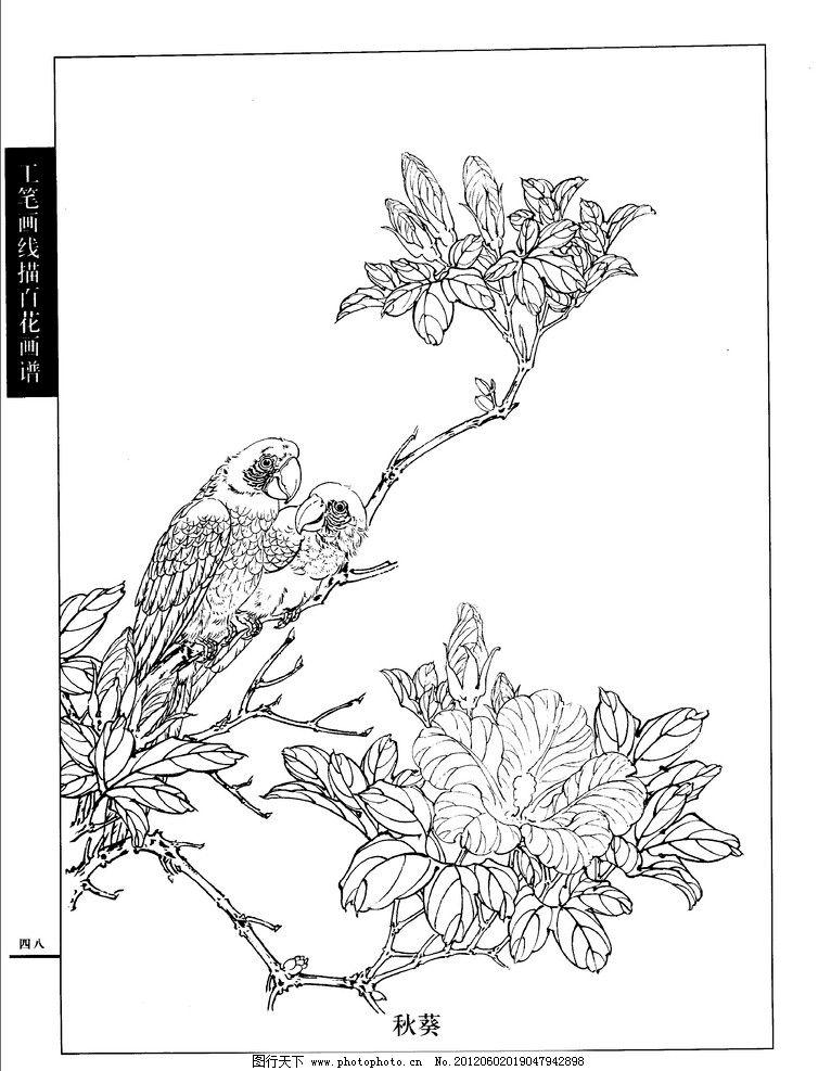 工笔画 线描 百花 画谱 白描 国画 唯美 秋葵 工笔白描花鸟图谱 绘画