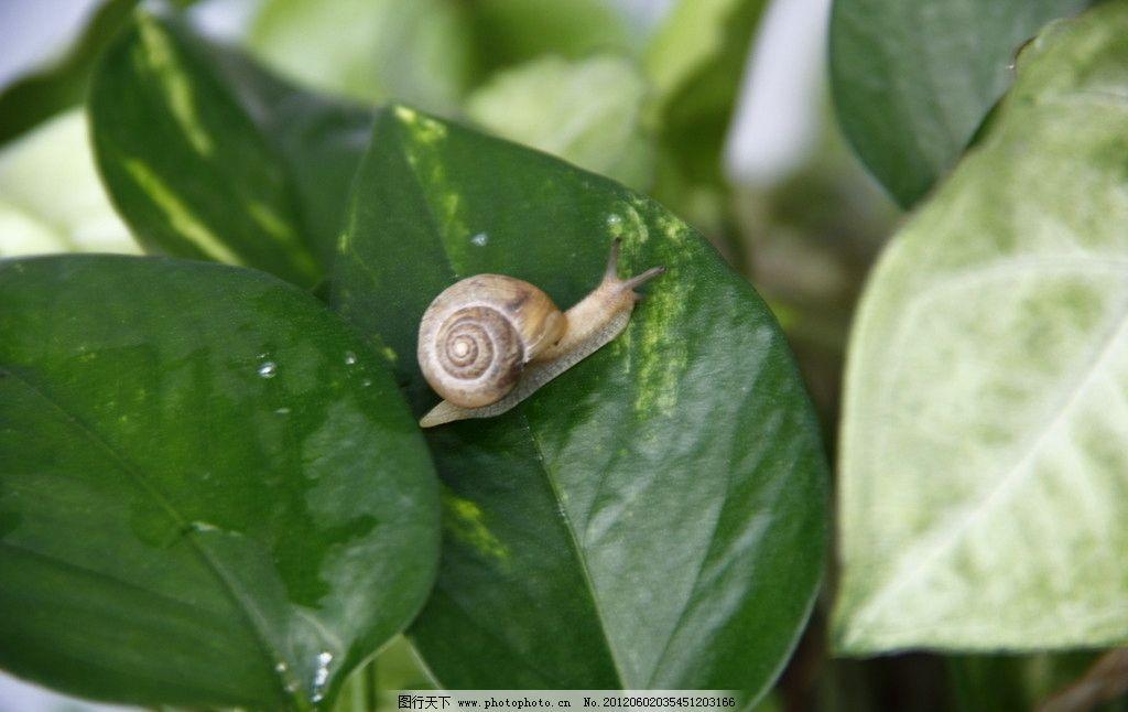 蜗牛 软体动物 摄影 小动物