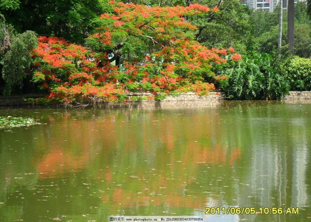 影子 绿树红花 倒影 花影 树影 水塘 水中倒影 自然风景 自然景观