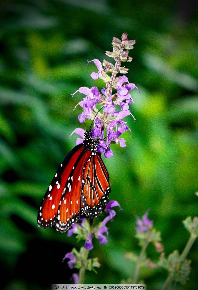 蝴蝶 动物 花朵 绿叶 昆虫摄影