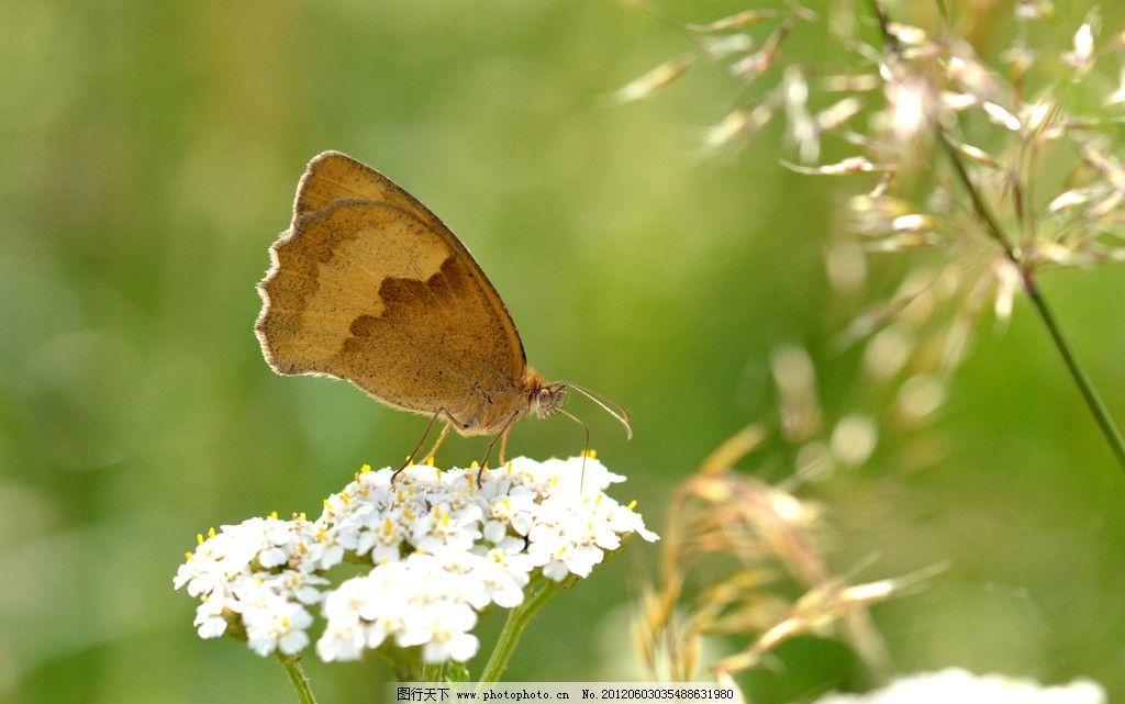 蝴蝶 动物 昆虫摄影 蝴蝶素材 蝴蝶图片集 昆虫 生物世界 摄影 300dpi