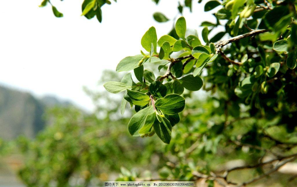 植物 树叶 数字 叶子 绿叶 植物特写 夏天植物 树木树叶 生物世界