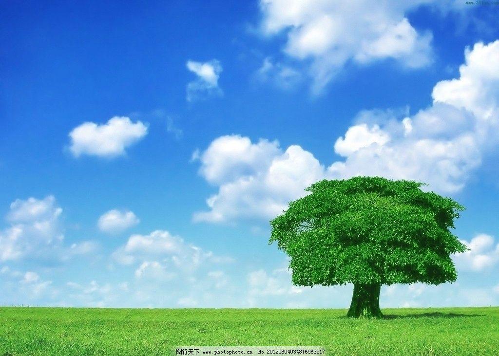 大自然景观 蓝天 白云 大树 一棵树 绿草地 背景 摄影