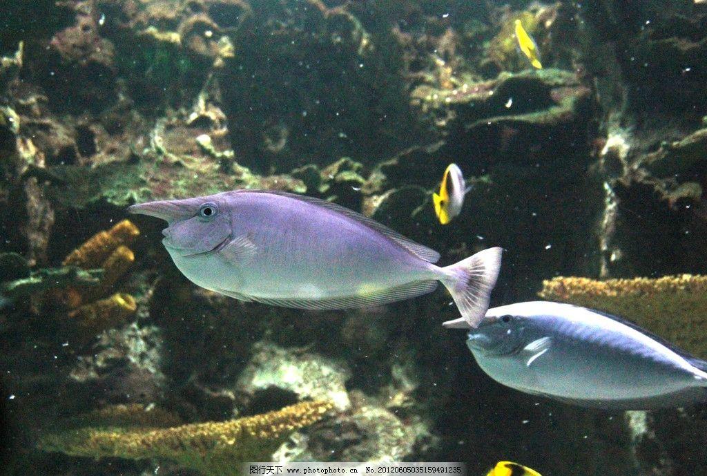 壁纸 动物 海底 海底世界 海洋馆 水族馆 鱼 鱼类 1024_689