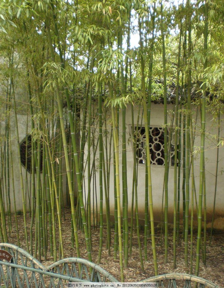 竹林 园林 围挡 白墙 园林建筑 建筑园林 摄影 72dpi jpg