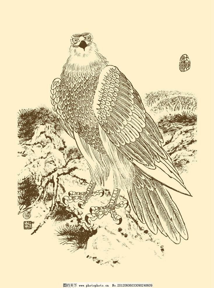 老鹰图片手绘图片