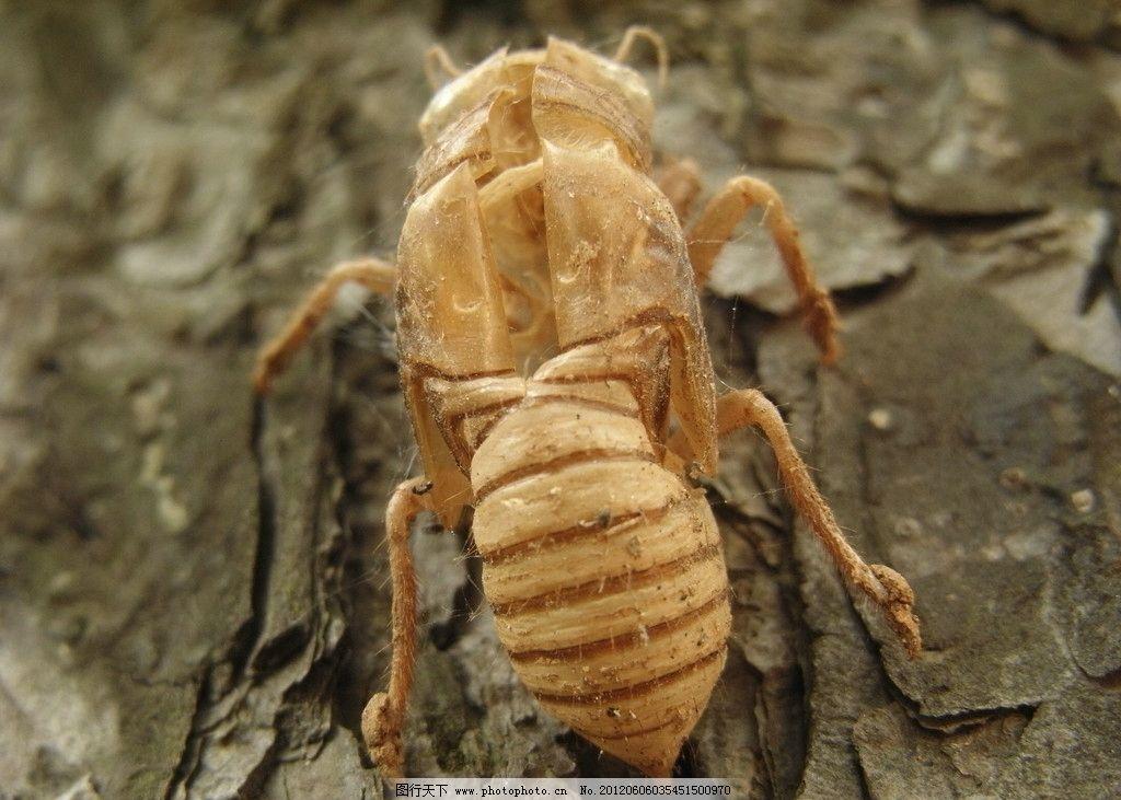 蝉的身体结构图及名称