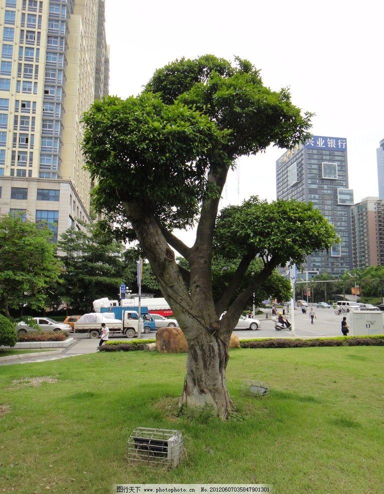 风景树 城市 城市公园 植物 生态园 绿树 摄影 自然风景 自然景观