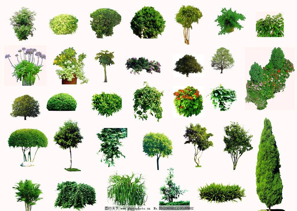 树木 园林 园林素材 psd分层素材 源文件 300dpi psd