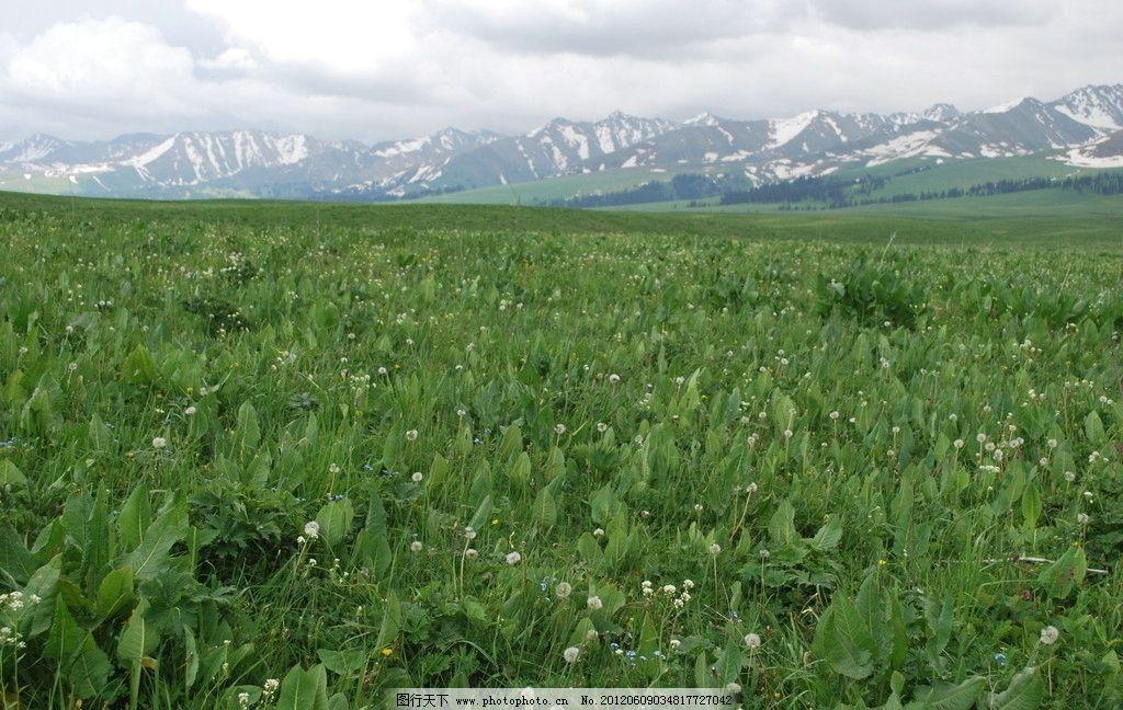 新疆伊犁州那拉提草原夏牧场图片_自然风景_自然景观