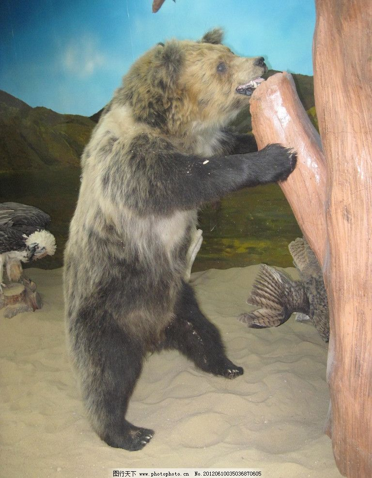高原野熊 熊抱 高原黑熊 标本 野生动物 生物世界 摄影